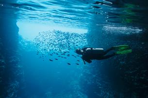 Woman scuba diving underwater among school of fish, Vava'u, Tonga, Pacific Oceanの写真素材 [FYI02187419]