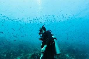 Man scuba diving underwater among school of fish, Vava'u, Tonga, Pacific Oceanの写真素材 [FYI02187429]