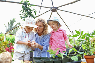 Woman with two children planting seedlings in greenhouseの写真素材 [FYI02187559]