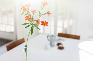 Close up of flower in vase on dining room tableの写真素材 [FYI02188080]