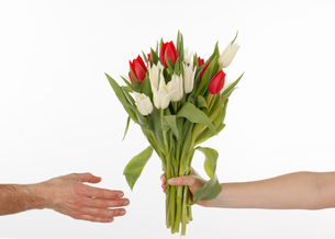 Woman giving bunch of tulips to manの写真素材 [FYI02189966]