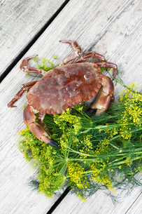Sweden, Bohuslan, Directly above of crab andの写真素材 [FYI02190008]