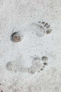 Sweden, Norrbotten, Klubbviken, Foot print in sandの写真素材 [FYI02190077]
