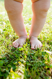Sweden, Low section of baby (6-11 months) standing barefootの写真素材 [FYI02190139]