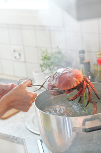 Mature woman putting crab into boiling waterの写真素材 [FYI02190775]
