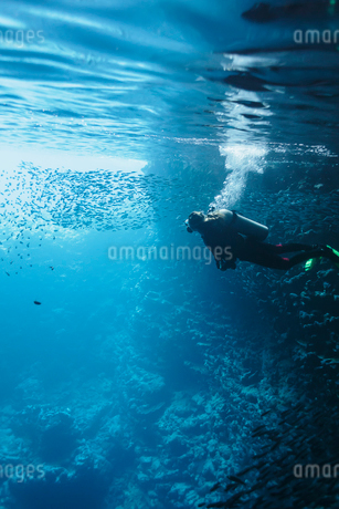 Woman scuba diving underwater among school of fish, Vava'u, Tonga, Pacific Oceanの写真素材 [FYI02192511]