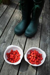 Sweden, Rubber boots and raspberriesの写真素材 [FYI02192635]