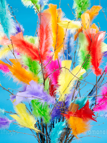 Bouquet of colorful feathersの写真素材 [FYI02192797]
