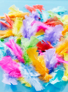 Colorful feathersの写真素材 [FYI02192854]