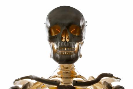 Studio shot of human skeletonの写真素材 [FYI02192942]