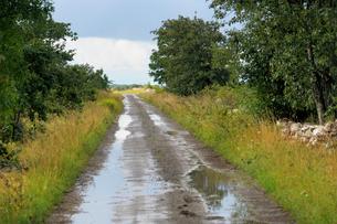 Sweden, Oland, Dirt track after rainの写真素材 [FYI02193188]