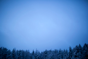 Finland, Salo, Pine tree forest at winterの写真素材 [FYI02193250]