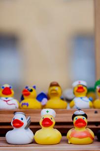 Sweden, Stockholm, Close up of rubber ducksの写真素材 [FYI02193340]