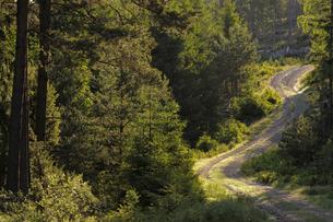 Sweden, Vastergotland, Dirt track through forestの写真素材 [FYI02193433]