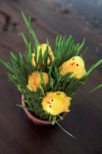 Finland, Elevated view of grass and Easter baby chickens onの写真素材 [FYI02193531]