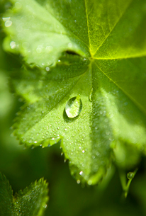 Finland, Close-up of water drop on leafの写真素材 [FYI02193588]