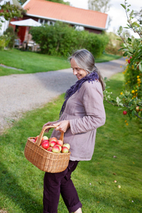 Sweden, Vastergotland, Tarby, Senior woman with basket of apples by footpathの写真素材 [FYI02194332]