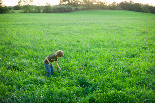 Sweden, Skane, Osterlen, Boy (6-7) picking wildflowersの写真素材 [FYI02195710]