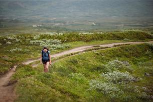 Sweden, Jamtland, Blahammaren fell, Woman hiking in meadowsの写真素材 [FYI02195717]