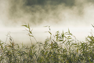 Sweden, Sodermanland, Yngaren, Grass with fog in backgroundsの写真素材 [FYI02196100]