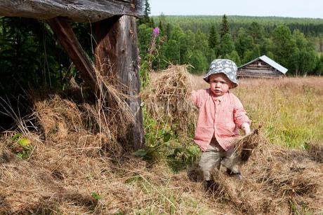 Sweden, Harjedalen, Ytterberg, Boy (2-3) collecting hayの写真素材 [FYI02196103]