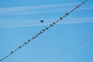 Finland, Eckero, Berghamn, Swallows on wireの写真素材 [FYI02196493]