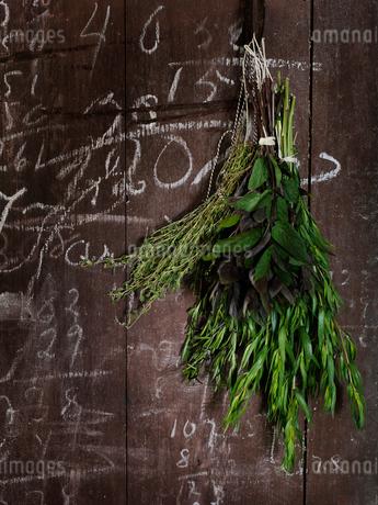 Bunch of herbsの写真素材 [FYI02196534]