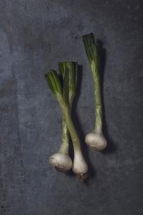 Studio shot of spring onionの写真素材 [FYI02196935]