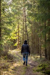 Sweden, Vastergotland, Lerum, Rear view of hiker in forestの写真素材 [FYI02197075]