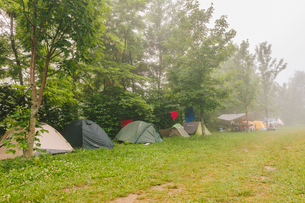 France, Pelleautier, Ceuse, Tents set up along row of treesの写真素材 [FYI02197322]