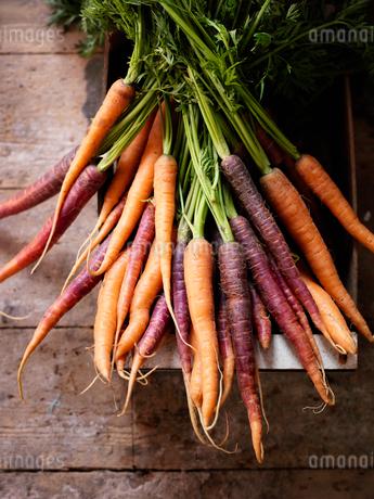 Bunch of carrotsの写真素材 [FYI02197501]