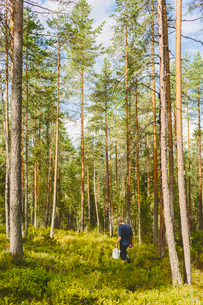 Finland, Keski-Suomi, Jyvaskyla, Man hiking in pine forestの写真素材 [FYI02198529]