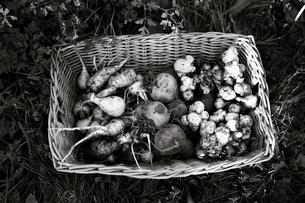Sweden, Root vegetables in basketの写真素材 [FYI02198617]