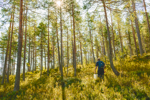 Finland, Keski-Suomi, Jyvaskyla, Man walking in pine forestの写真素材 [FYI02198859]
