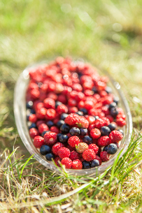 Sweden, Smaland, Wild strawberries and blueberries on grassの写真素材 [FYI02200159]