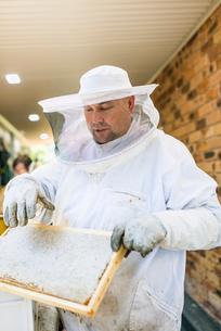 Australia, Queensland, Beekeeper holding honeycombの写真素材 [FYI02200252]