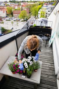 Young woman gardening on balconyの写真素材 [FYI02200317]