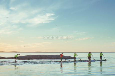 Finland, Varsinais-Suomi, Eura, Paddlers during race at sunriseの写真素材 [FYI02200352]