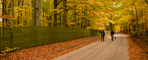 Sweden, Skane, Torna-Hallestad, Man and woman walking on footpath in forestの写真素材 [FYI02200655]