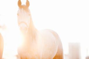 Sweden, Smaland, Sundsholm, Portrait of horse at dawnの写真素材 [FYI02201789]