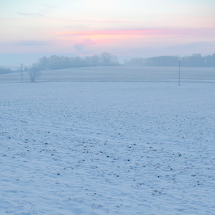 Sweden, Skane, Sodra Sandby, Plain covered with snow at dawnの写真素材 [FYI02201876]
