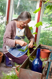 Sweden, Vastergotland, Tarby, Woman working in domestic gardenの写真素材 [FYI02202041]