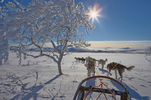 Sweden, Jamtland, Snasahogarna, Storvallen, View of dog sledの写真素材 [FYI02202280]