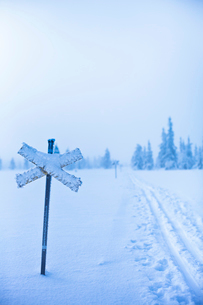 Sweden, Dalarna, Salen, Cross sign by ski tracks with pine forest in background in winterの写真素材 [FYI02202362]