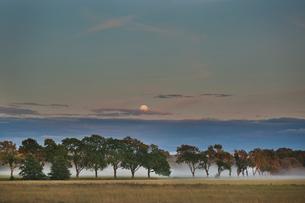 Sweden, Vastmanland, Trees in plain at duskの写真素材 [FYI02202721]