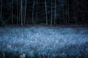 Sweden, Vaster Gotland, Frost covered plants in meadowの写真素材 [FYI02202779]