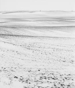 Sweden, Skane, Anderslov, Bare field in winterの写真素材 [FYI02202829]