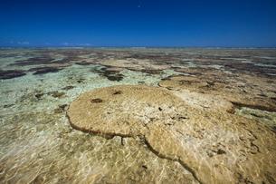 Australia, Queensland, Great Barrier Reef, Lady Elliott Island, Transparent sea water under blue skyの写真素材 [FYI02202888]