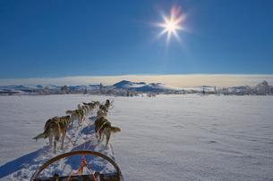 Sweden, Jamtland, Snasahogarna, Storvallen, View of dog sledの写真素材 [FYI02202910]