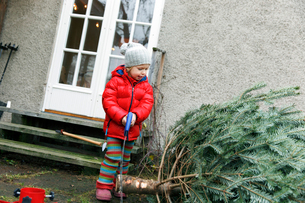 Sweden, Boy (2-3) standing by Christmas tree in front yardの写真素材 [FYI02203261]
